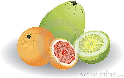 Pomelo Fruit Stock Illustrations.