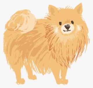 Pomeranian PNG, Transparent Pomeranian PNG Image Free.