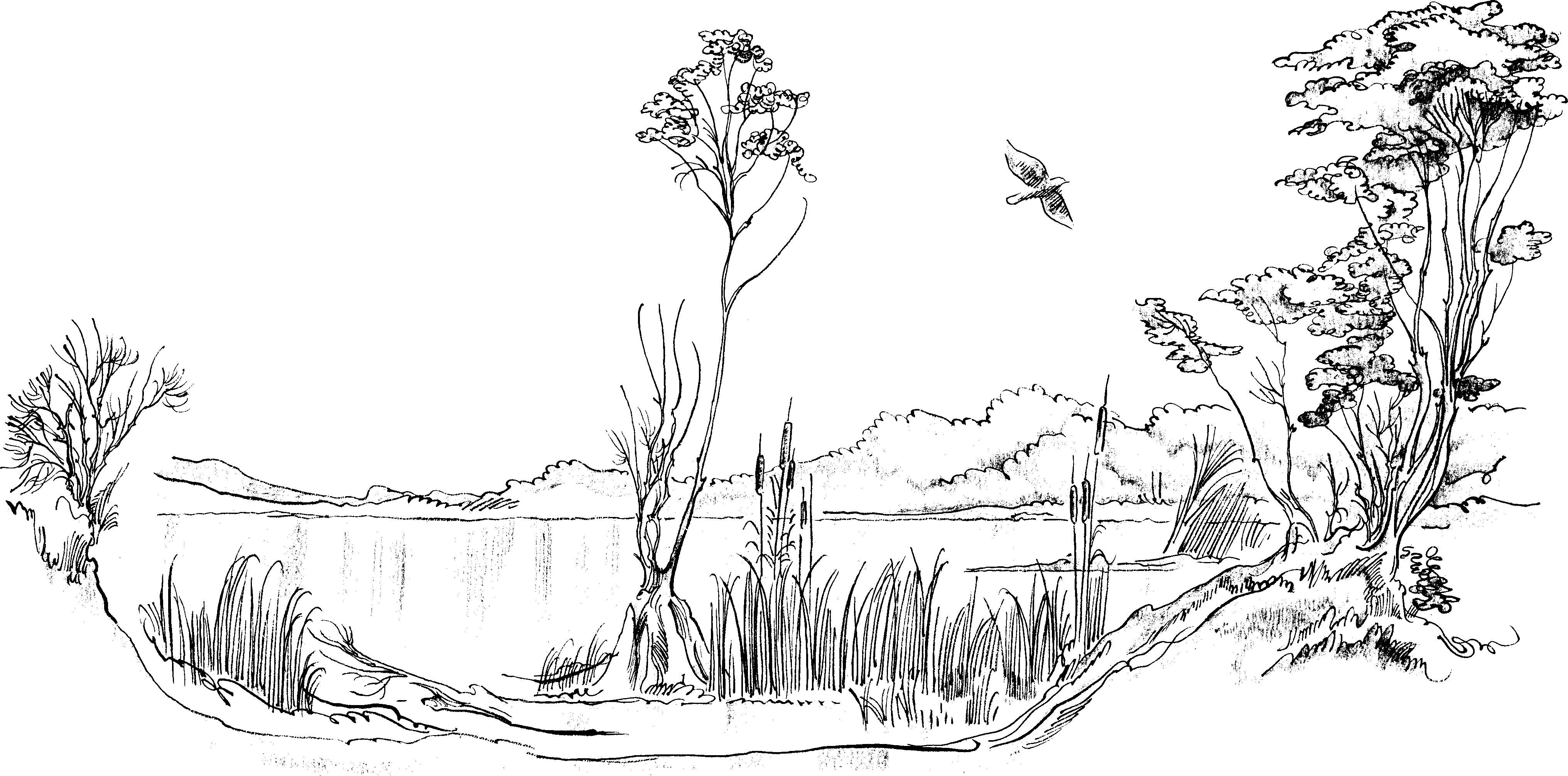 Fish Pond Clipart Black And White.