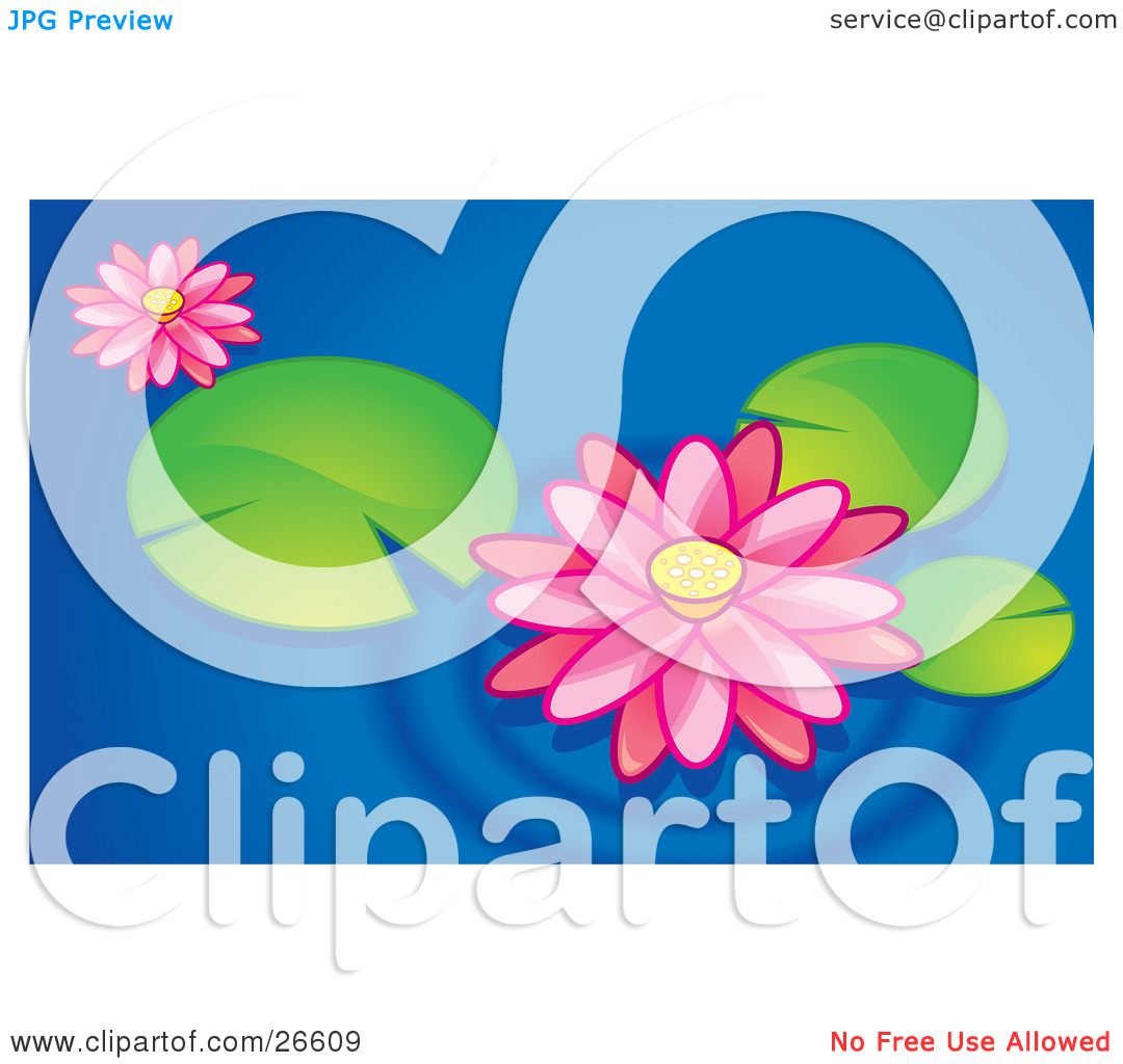 Clipart Illustration of Two Pink Lotus Flowers Floating With.