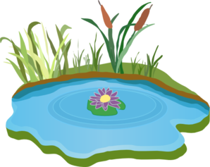 Pond Clipart No Background.