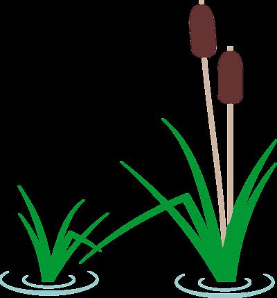 Pond grass clipart.