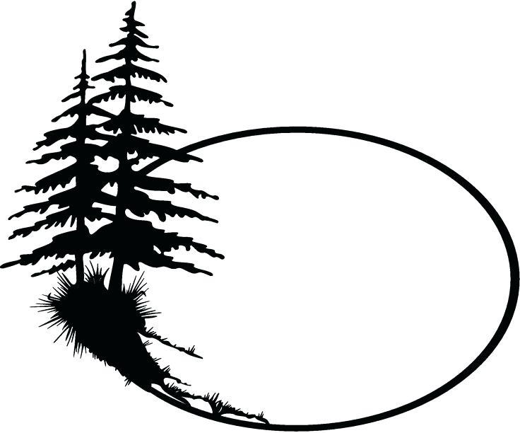 Ponderosa Pine Drawing.