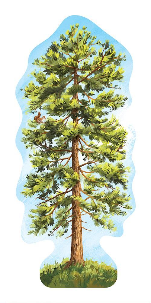 Ponderosa Pine Tree Sticker.