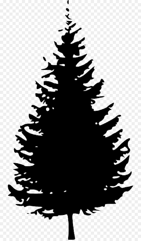 Ponderosa pine Tree Clip art.