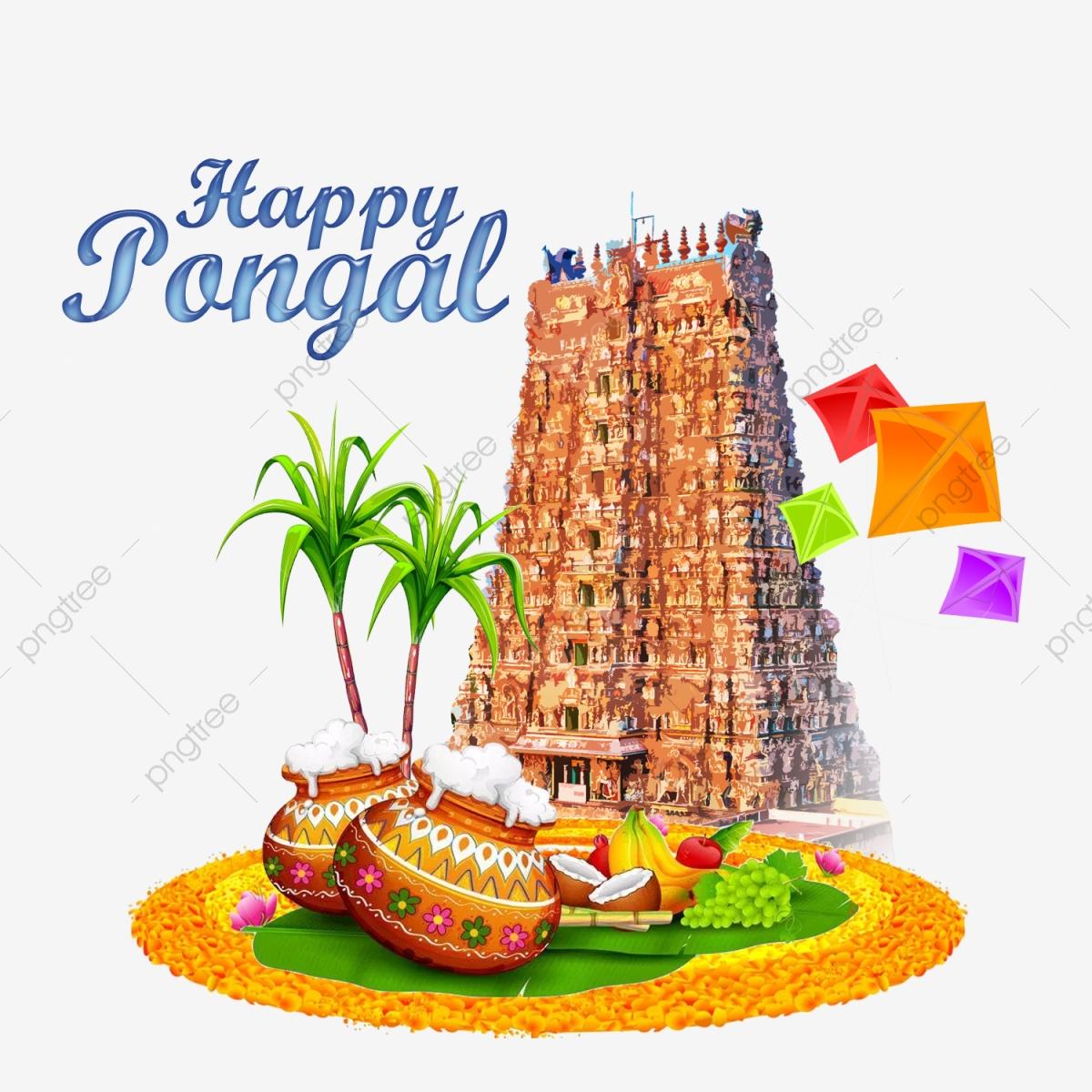 Pongal Graphic Pongal Vector Pongal Greetings, Pongal.