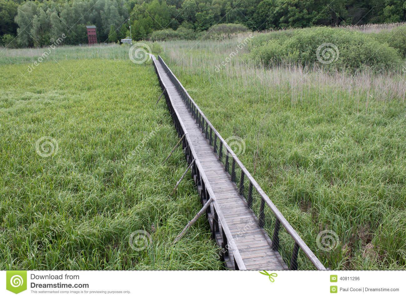 Pontoon Bridge Over Swamp Stock Photo.