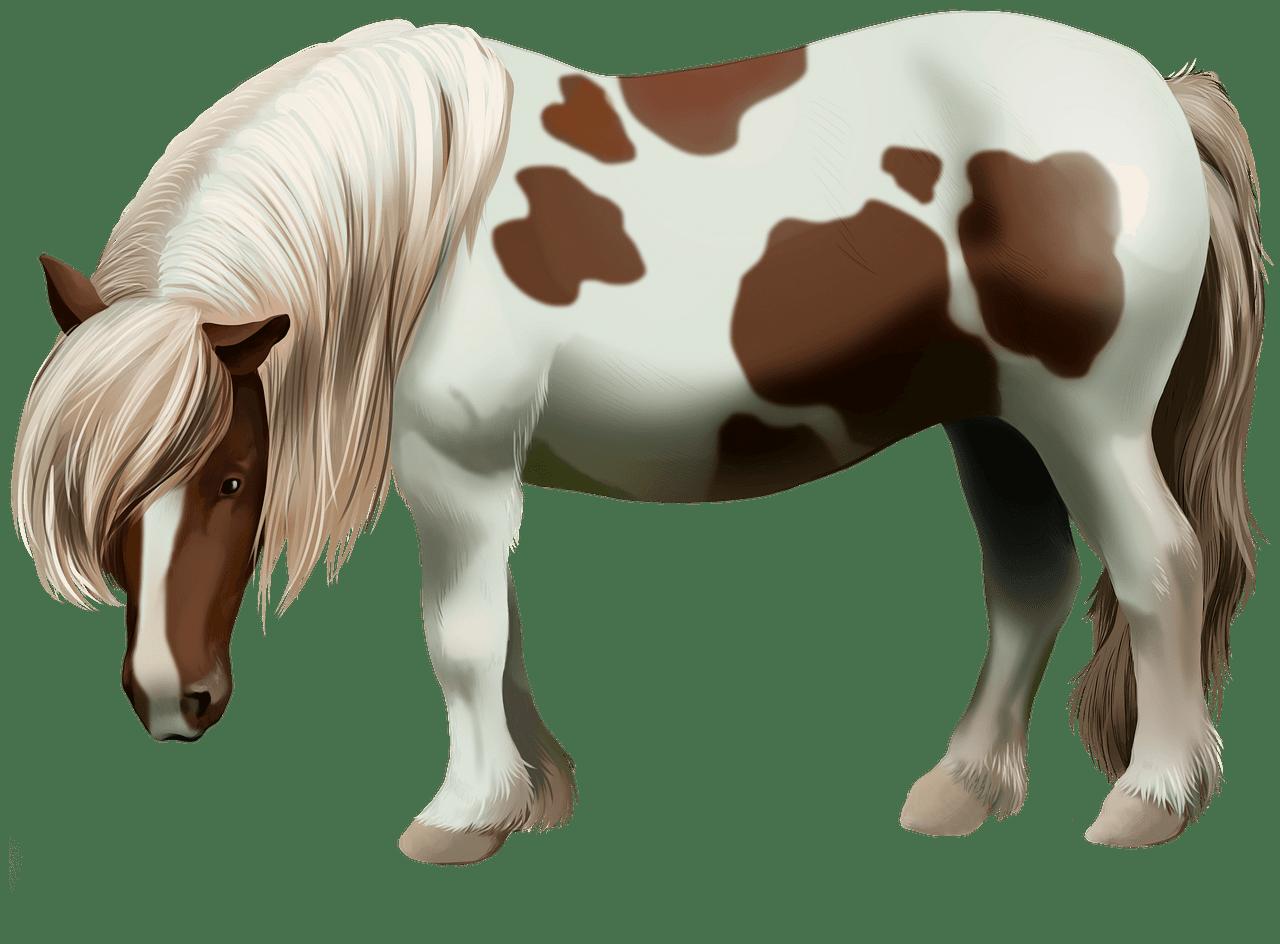 Shetland Pony clipart. Free download..