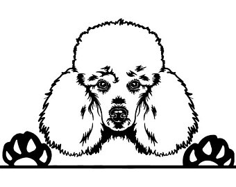Poodle Line Drawing.