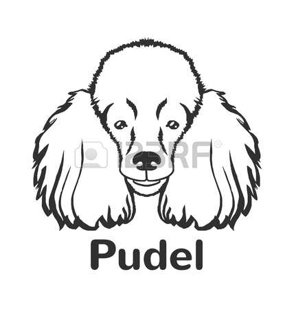 442 Black Poodle Stock Vector Illustration And Royalty Free Black.