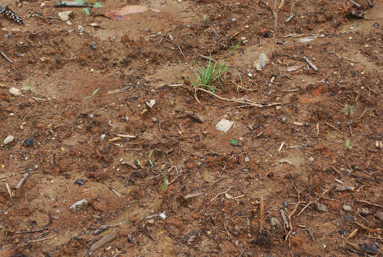Soil Testing Is Fool.