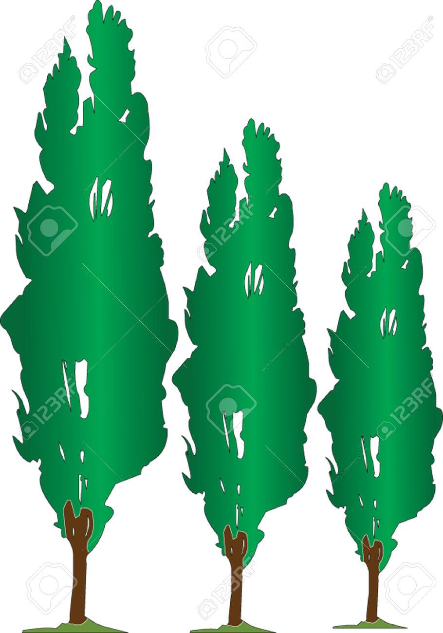 Poplar seeds clipart #3