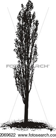 Clip Art of Poplar Tree k2069622.
