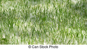 Stock Image of Spring and allergy.