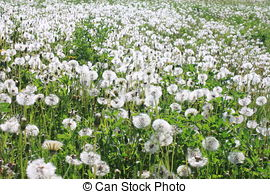 Stock Photography of Spring and allergy.