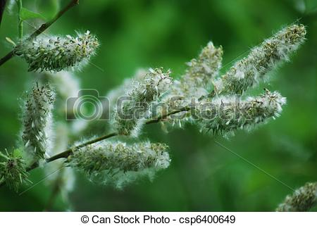 Stock Photographs of poplar down on water background at the summer.