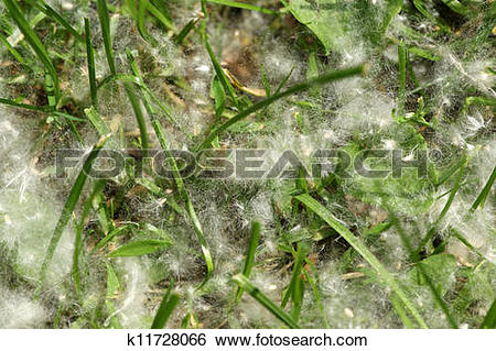 Stock Images of Spring and allergy.