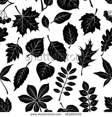 Buckeye Tree Stock Images, Royalty.