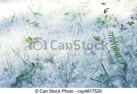 Stock Photography of Poplar seed tufts.