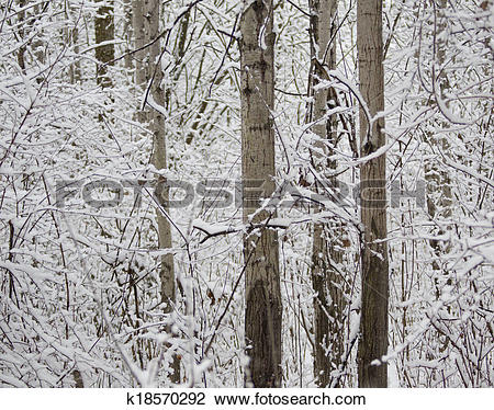 Clip Art of Winter Poplar k18570292.