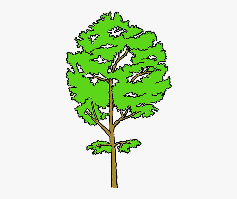 Tree, Aspen, Poplar, Nature, Green , Transparent Cartoon.