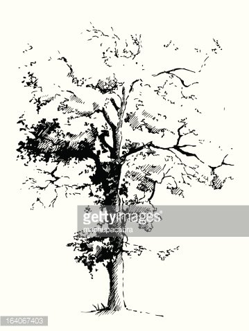 Black poplar tree Clipart Image.