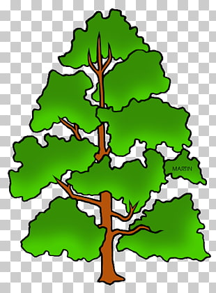 33 poplar Tree PNG cliparts for free download.