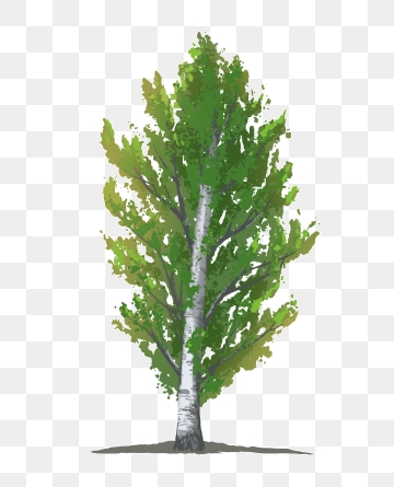 Poplar Tree Png, Vector, PSD, and Clipart With Transparent.