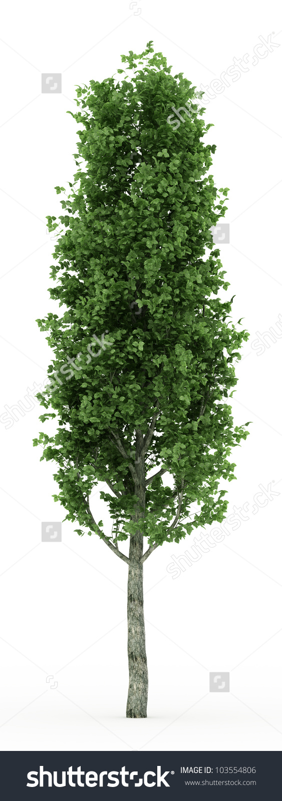 3d Poplar Tree Isolated Over White Stock Illustration 103554806.