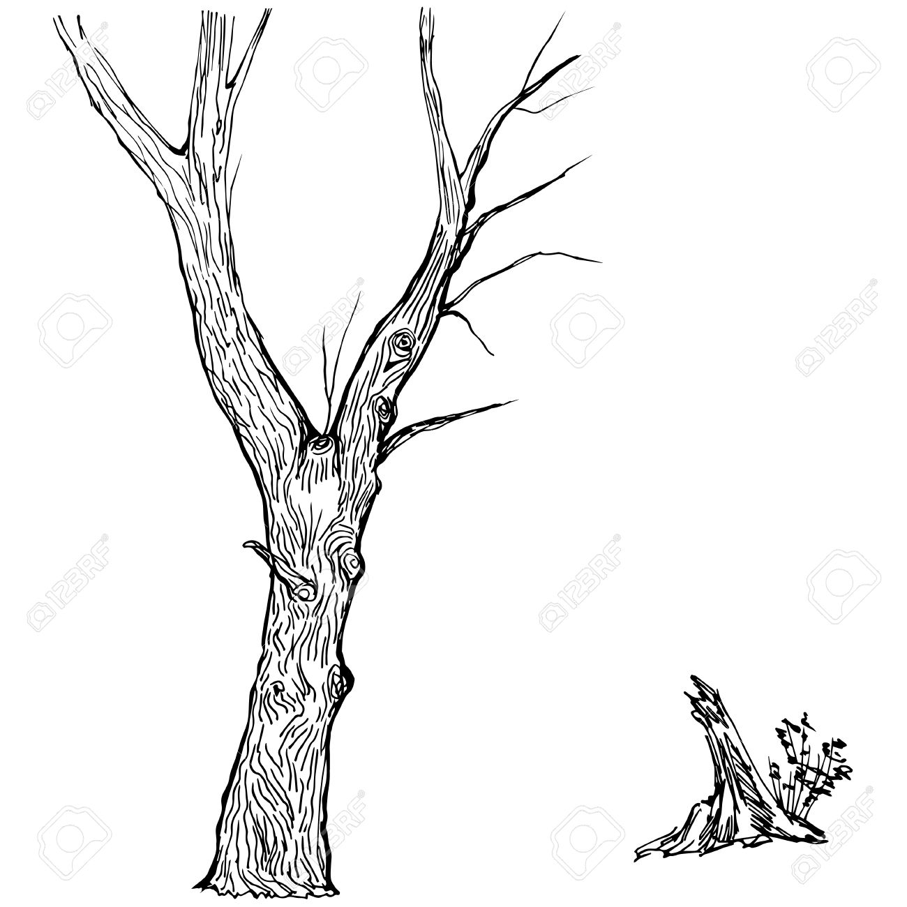 Hand Drawn Tree Silhouette And Stump On White Background Royalty.