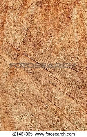 Stock Image of Poplar Wood Cross Section Texture k21467865.