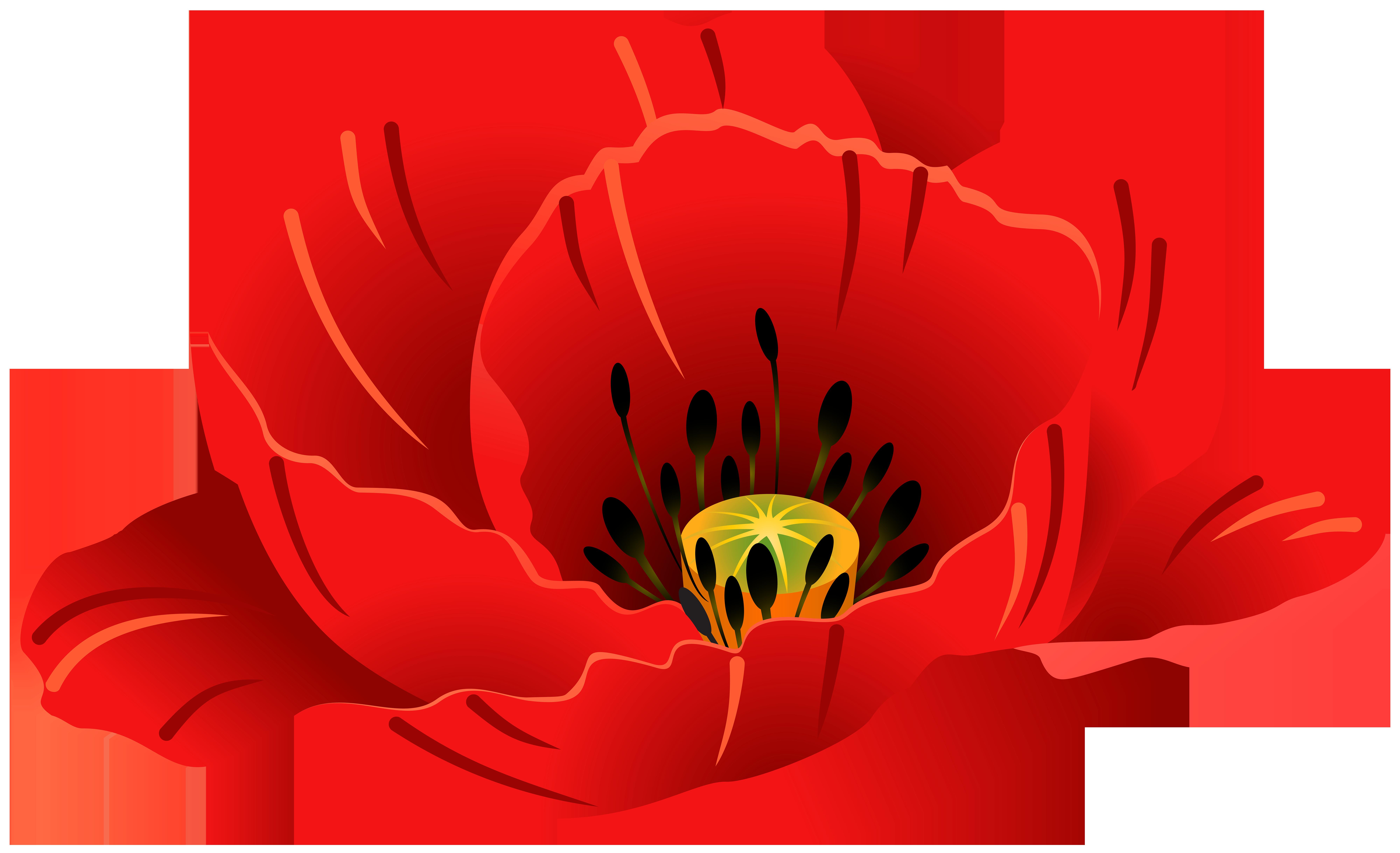 Poppy Transparent PNG Clip Art Image.
