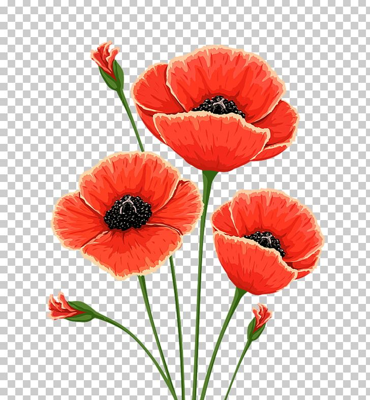 Common Poppy Flower Remembrance Poppy PNG, Clipart.