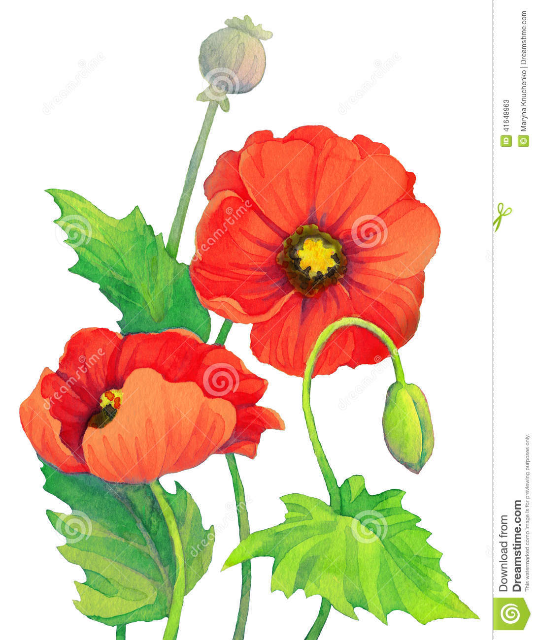 Watercolor Red Poppies. Flowers, Bud And Capsule Poppy Head Stock.