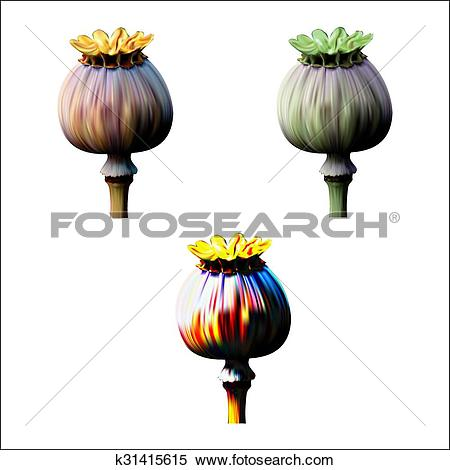 Clipart of Set of Poppy green and red capsule on white background.