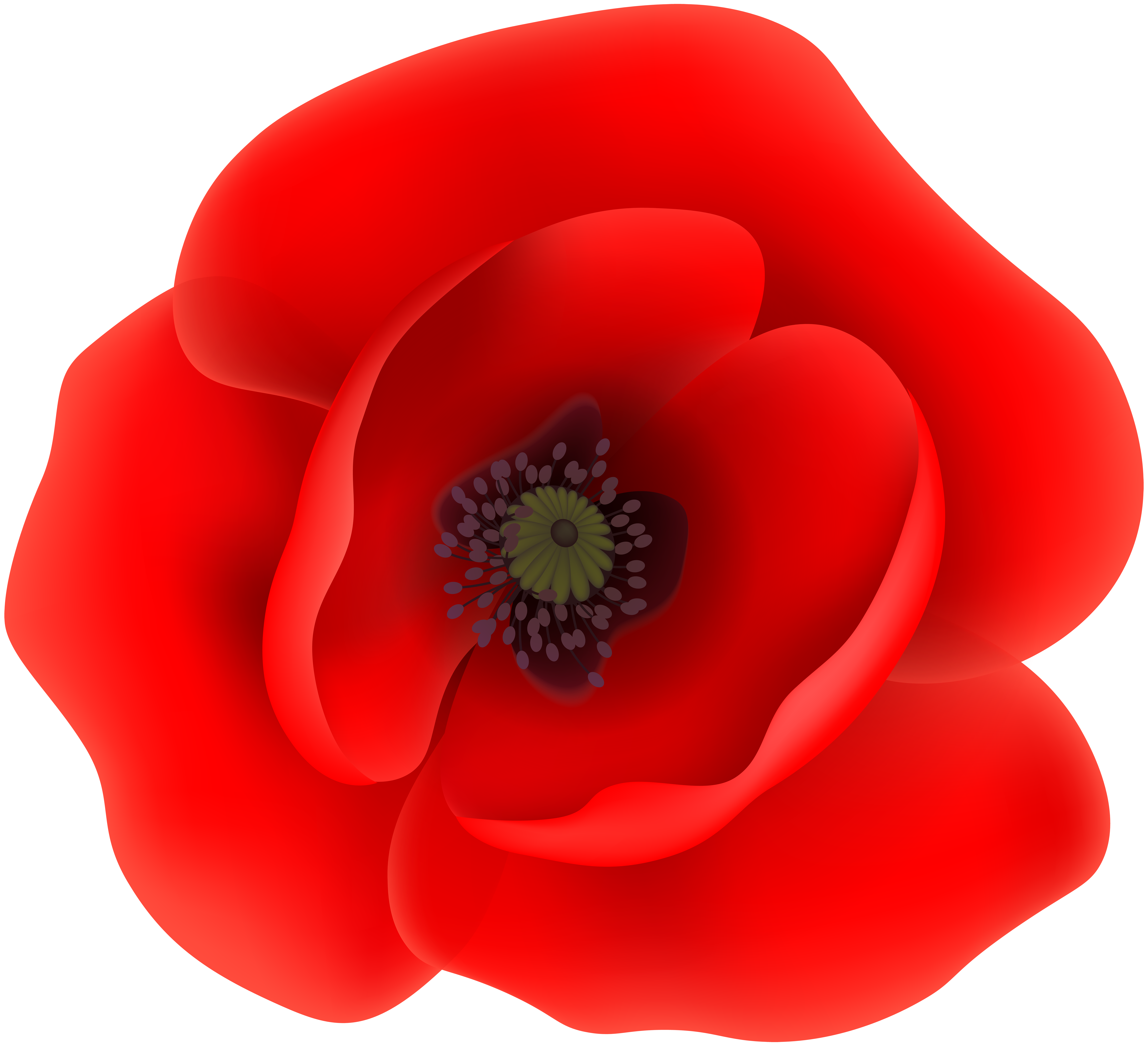 Poppy Flower Clip Art Transparent Image.