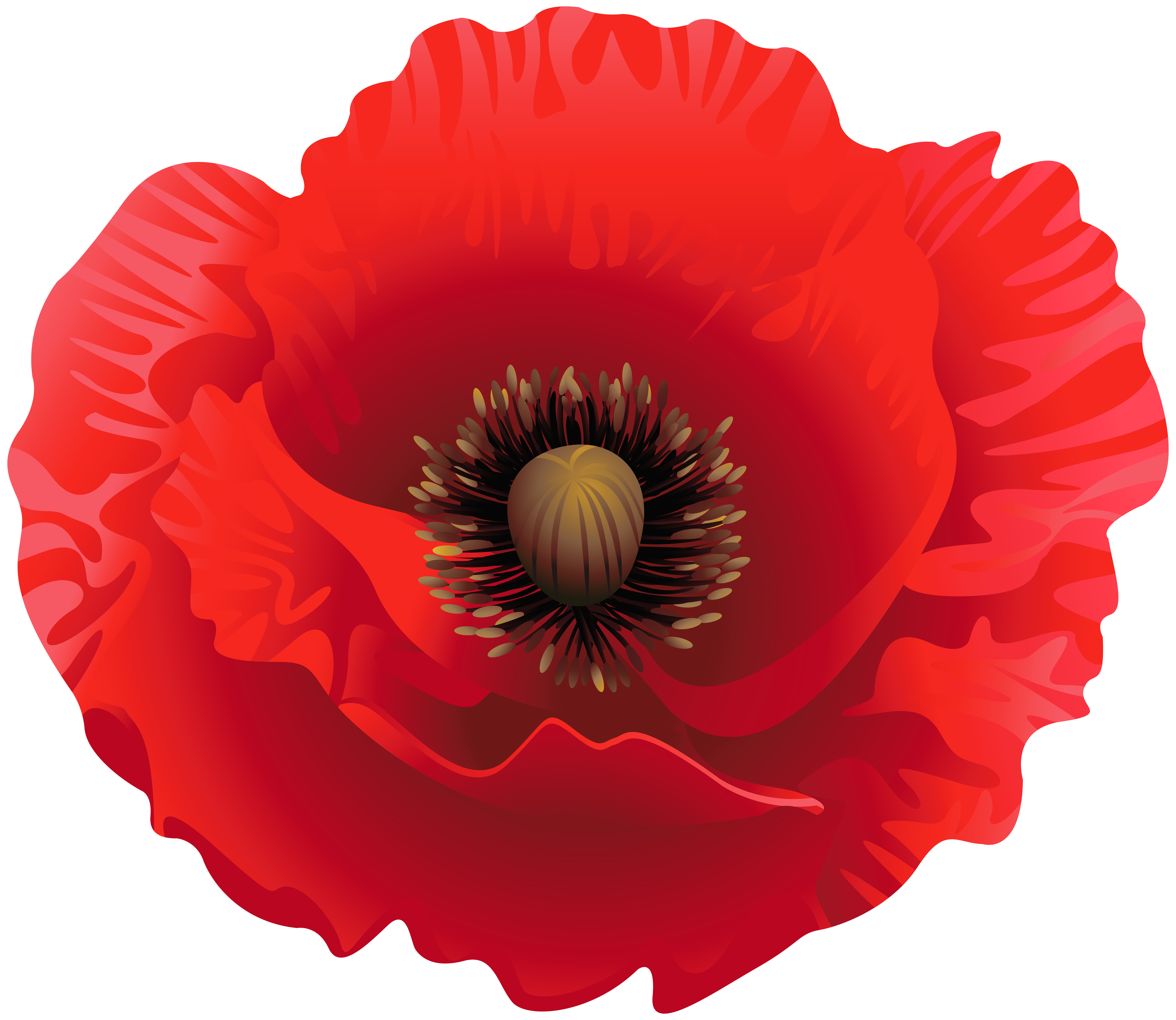 Poppy Clipart Image.