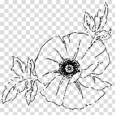 Flowers, black poppy flower illustration transparent.