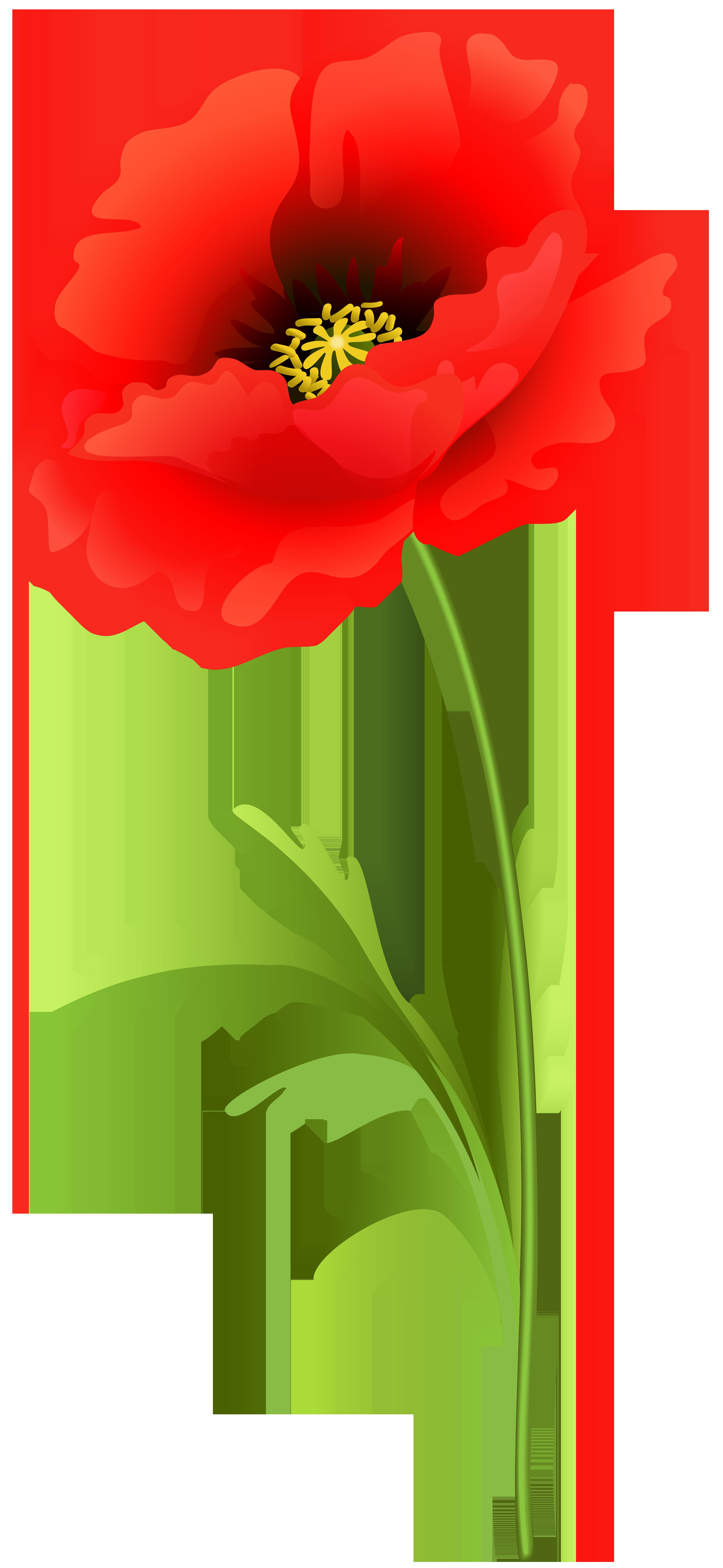 Poppy Flower PNG Clip Art Image.