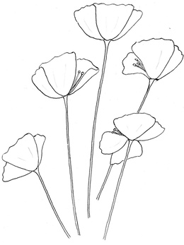 California Poppy Sketch at PaintingValley.com.