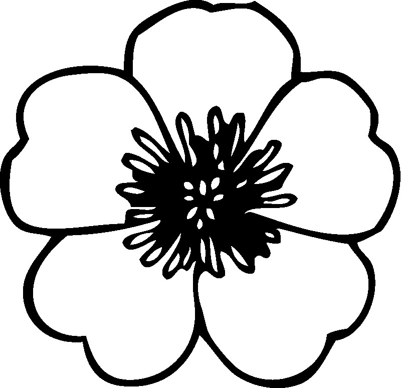 Poppy Outline Drawing at GetDrawings.com.