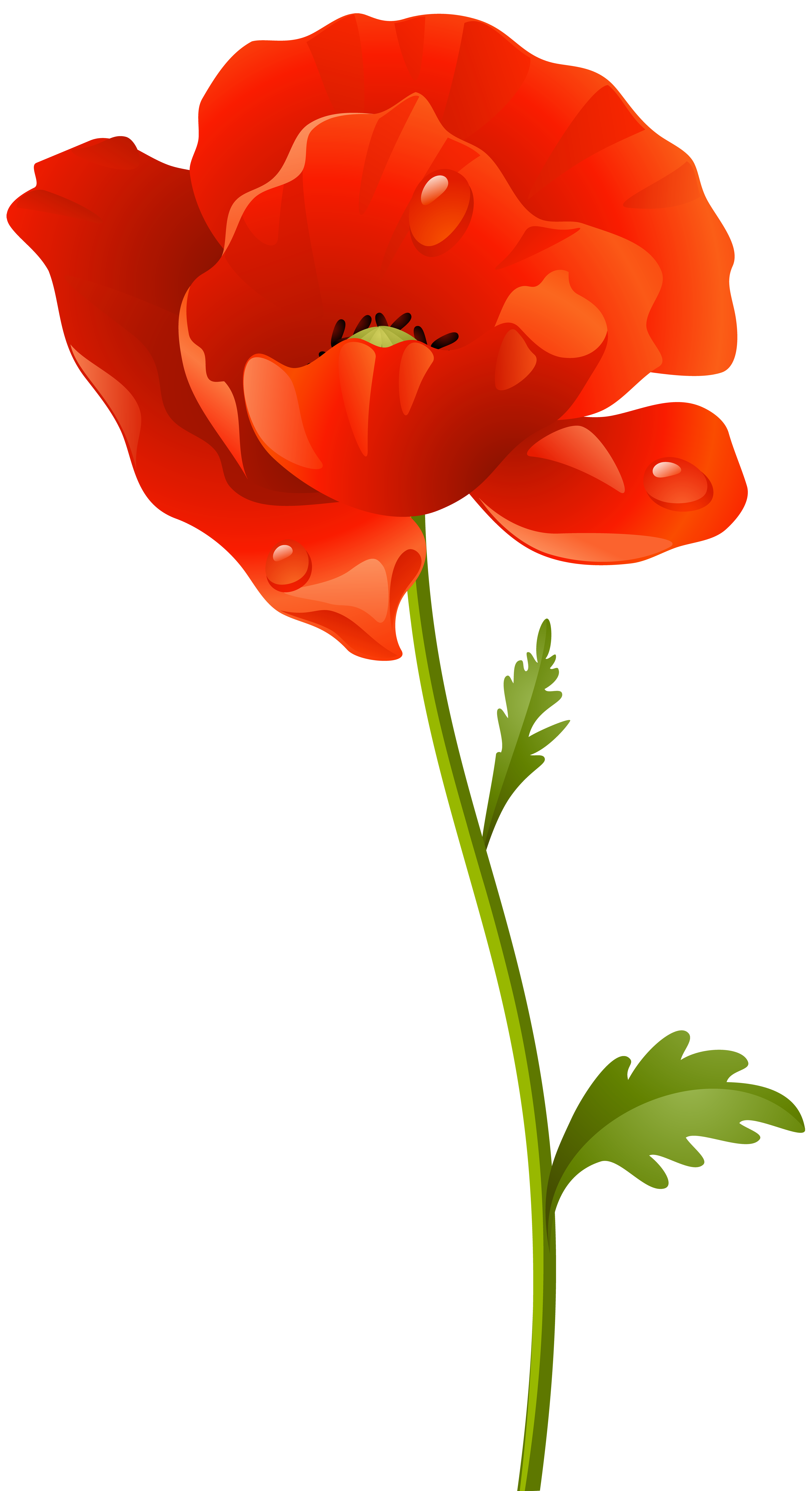Red Poppy Png & Free Red Poppy.png Transparent Images #32540.