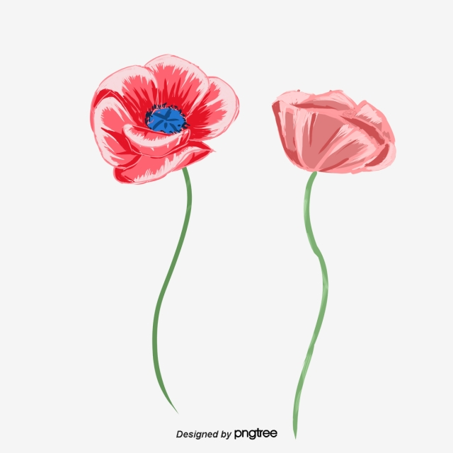 Poppy Png, Vector, PSD, and Clipart With Transparent.