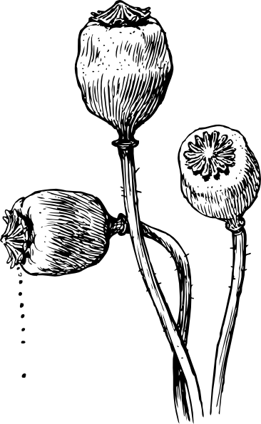 Poppy Heads Clip Art at Clker.com.