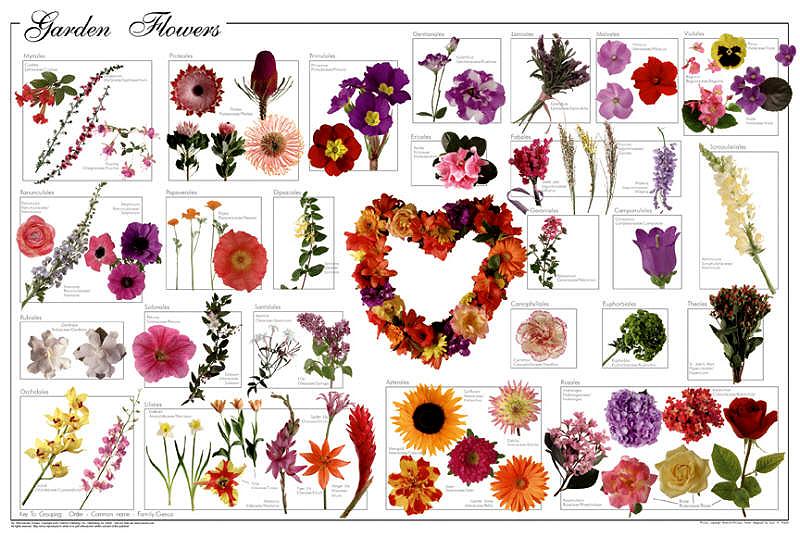 Garden Plant Clipart Gardening Flowers Poster