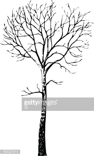 Tree Aesculus Hippocastanum Vector Vector Art.