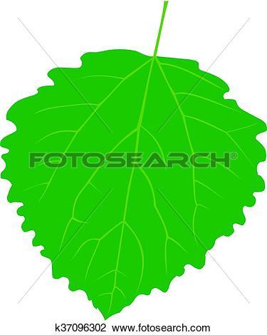 Clipart of aspen poplar, Populus tremula k37096302.
