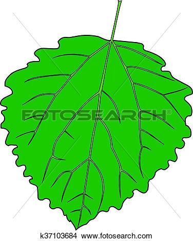 Clipart of aspen poplar, Populus tremula k37103684.
