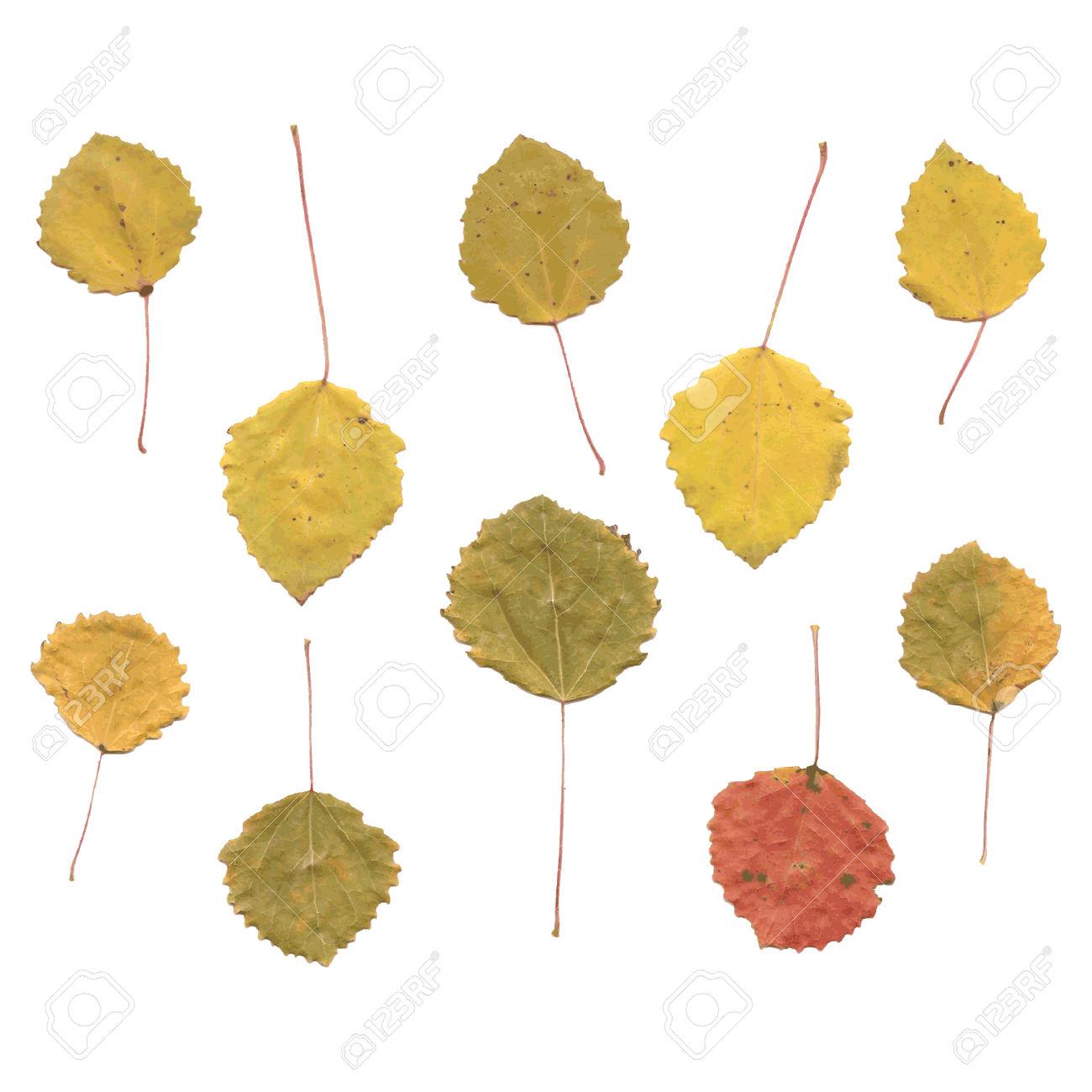 Autumn Birch Or Betula, Aspen Or Populus Tremula Leaves, Set.