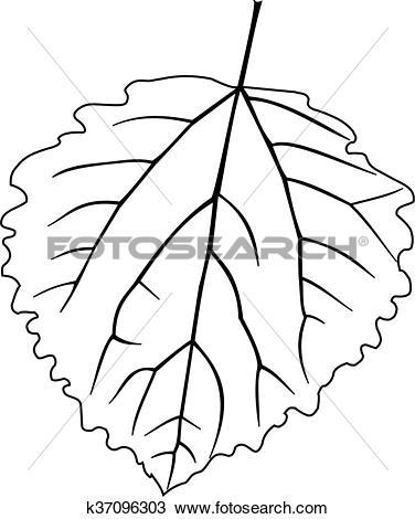 Clipart of aspen poplar, Populus tremula k37096303.